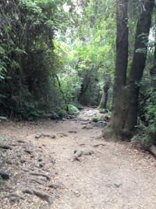 Tel Dan Reserve